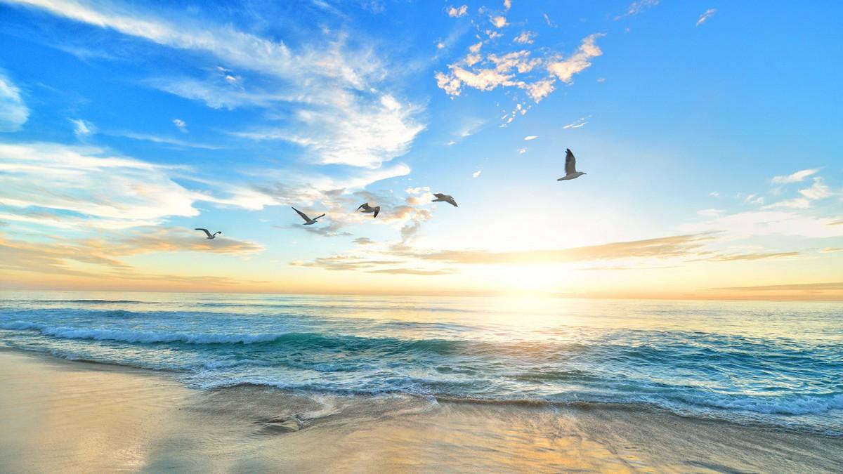 Hình ảnh background bờ biển hải âu bay