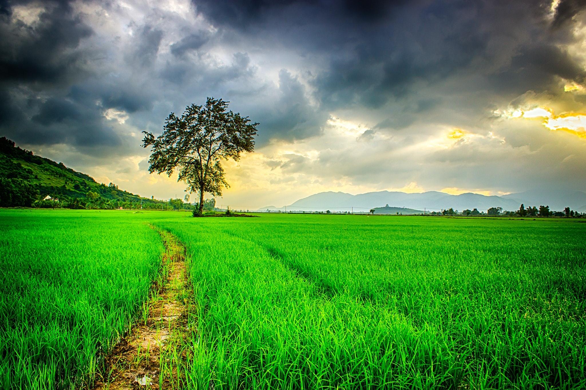 Hình ảnh background đồng cỏ xanh